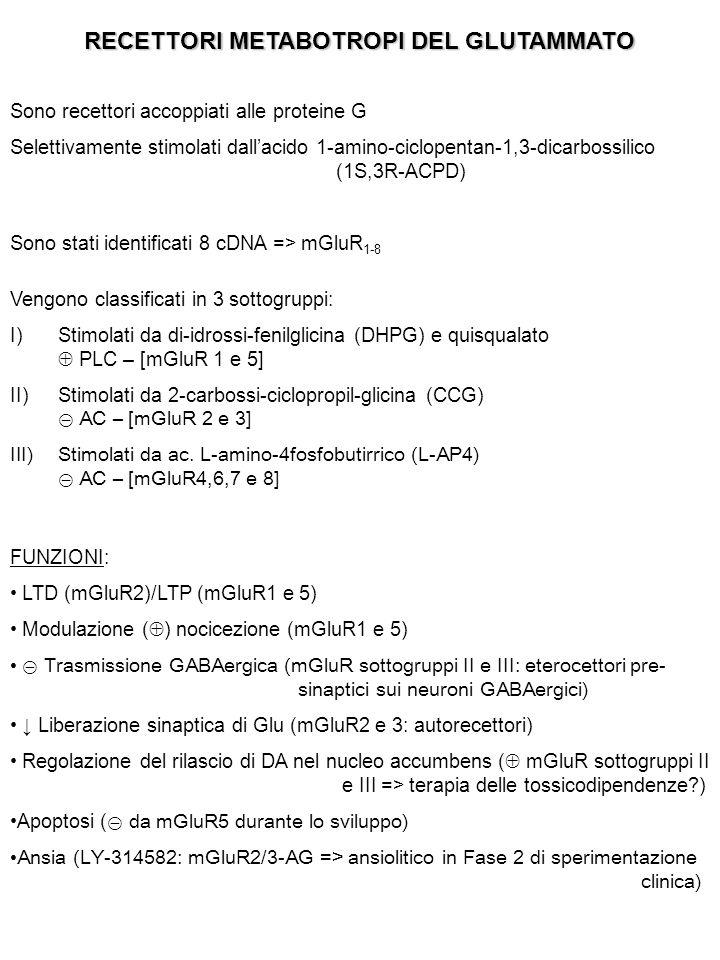 RECETTORI METABOTROPI DEL GLUTAMMATO Sono recettori accoppiati alle proteine G Selettivamente stimolati dall'acido 1-amino-ciclopentan-1,3-dicarbossilico (1S,3R-ACPD) Sono stati identificati 8 cDNA => mGluR 1-8 Vengono classificati in 3 sottogruppi: I)Stimolati da di-idrossi-fenilglicina (DHPG) e quisqualato  PLC – [mGluR 1 e 5] II)Stimolati da 2-carbossi-ciclopropil-glicina (CCG) ⊝ AC – [mGluR 2 e 3] III)Stimolati da ac.