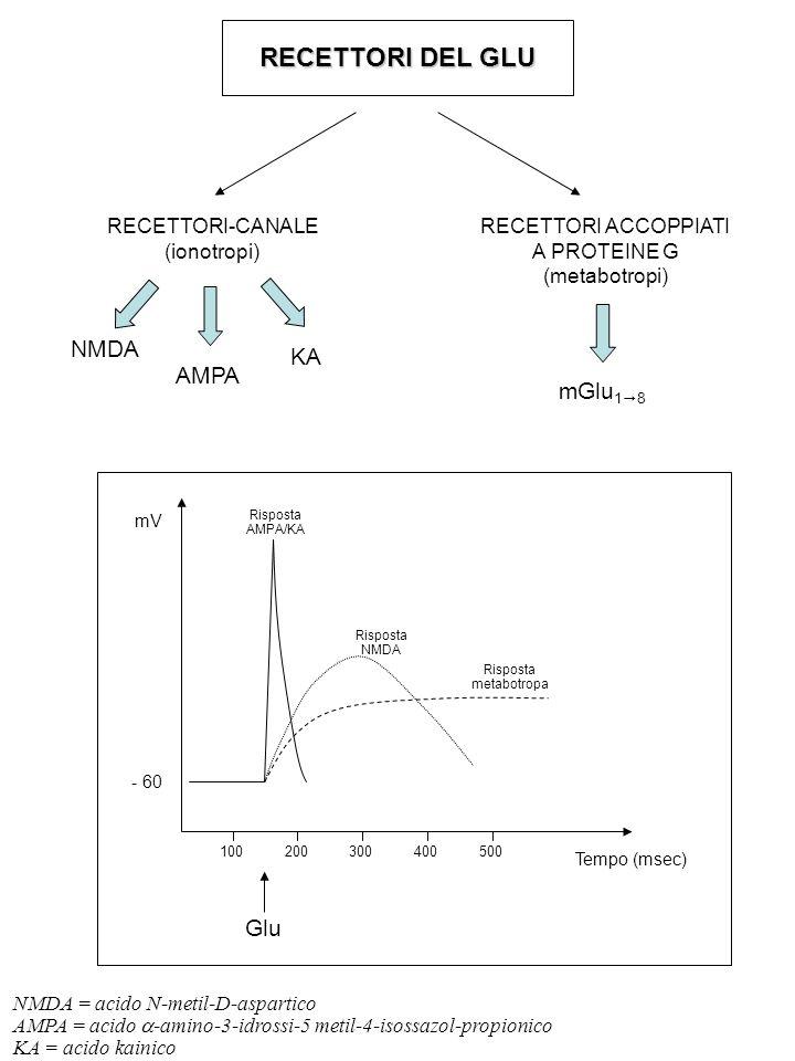 RECETTORI DEL GLU RECETTORI-CANALE (ionotropi) RECETTORI ACCOPPIATI A PROTEINE G (metabotropi) NMDA AMPA KA mGlu 1  8 mV Tempo (msec) - 60 100 200 300 400 500 Glu Risposta AMPA/KA Risposta NMDA Risposta metabotropa NMDA = acido N-metil-D-aspartico AMPA = acido  -amino-3-idrossi-5 metil-4-isossazol-propionico KA = acido kainico