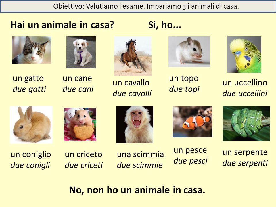 Obiettivo: Valutiamo l'esame. Impariamo gli animali di casa. Hai un animale in casa?Si, ho... No, non ho un animale in casa. un gatto due gatti un can