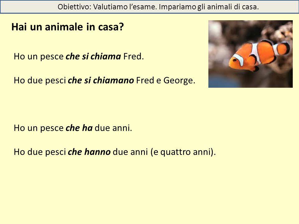 Obiettivo: Valutiamo l'esame. Impariamo gli animali di casa. Hai un animale in casa? Ho un pesce che si chiama Fred. Ho due pesci che si chiamano Fred