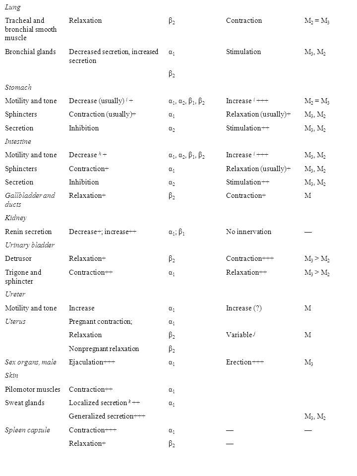 Adrenal medulla— Secretion of epinephrine and norepinephrine N (α 3 ) 2 (β 4 ) 3 ; M (secondarily) Skeletal muscleIncreased contractility; glycogenolysis; K + uptake β2β2 —— LiverGlycogenolysis and gluconeogenesis+++ α 1, β 2 —— Pancreas α AciniDecreased secretion + αSecretion ++ M 3, M 2 Islets (β cells)Decreased secretion +++ α2α2 — Increased secretion + β2β2 Fat cells l Lipolysis+++; (thermogenesis) α 1, β 1, β 2, β 3 —— Inhibition of lipolysisα2α2 Salivary glandsK + and water secretion+α1α1 K + and water secretion+++ M 3, M 2 Nasopharyngeal glands — Secretion++M 3, M 2 Pineal glandsMelanton synthesisβ— Posterior pituitaryAntidiuretic secretionβ1β1 — Autonomic nerve endings Sympathetic terminals AutoreceptorInhibition of NE releaseα 2A > α 2C (α 2B ) Heteroreceptor— Inhibition of NE release M 2, M 4 Parasympathetic terminal — Autoreceptor Inhibition of ACh release M 2, M 4 HeteroreceptorInhibition ACh releaseα 2A > α 2C