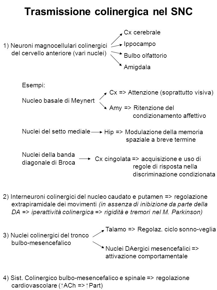 Sintesi dell'Acetilcolina Colina + Ac-CoA ACh ChAT La velocità di sintesi è regolata in modo da mantenere costante la quantità di ACh nel terminale (V sintesi ~V liberazione) Colina acetiltrasferasi (ChAT): - Enzima di 60-70 KDa - Presente quasi esclusivamente nei neuroni (placenta, spermatozoi ?) - Conc elevate nei neuroni => non è fattore limitante per la sintesi di Ach Ormoni tiroidei Estrogeni NGF - La > parte della ChAT è citosolica (< legata a membrane) I precursori dell'ACh: - Acetil-CoA: origina dal glucosio e dal piruvato si forma nei mitocondri - Colina: deriva dalla colina libera nel plasma e da quella dei fosfolipidi 35-50% della colina che si forma per idrolisi dell'ACh viene ricaptata e riutilizzata per la sintesi di Ach La disponibilità di colina è il fattore limitante la sintesi di Ach (La Vmax del trasportatore della colina riflette l'attività dei neuroni colinergici)  ↑ espressione ChAT neuronale (regolazione a lungo termine) Precursore della forma legata alle membrane Forma + imp dal punto di vista fisiologico