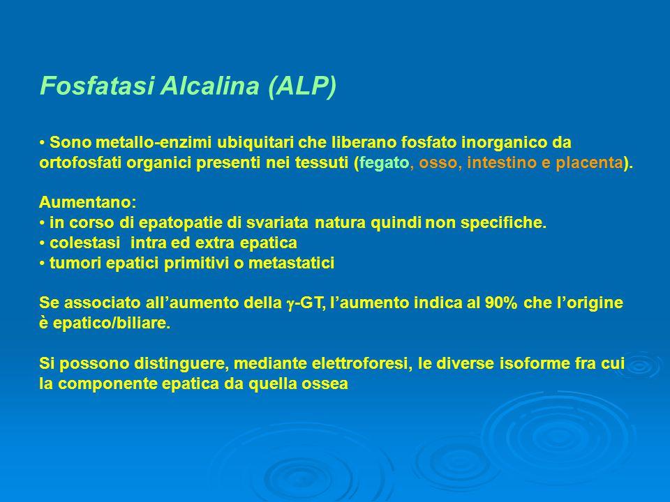 Fosfatasi Alcalina (ALP) Sono metallo-enzimi ubiquitari che liberano fosfato inorganico da ortofosfati organici presenti nei tessuti (fegato, osso, in