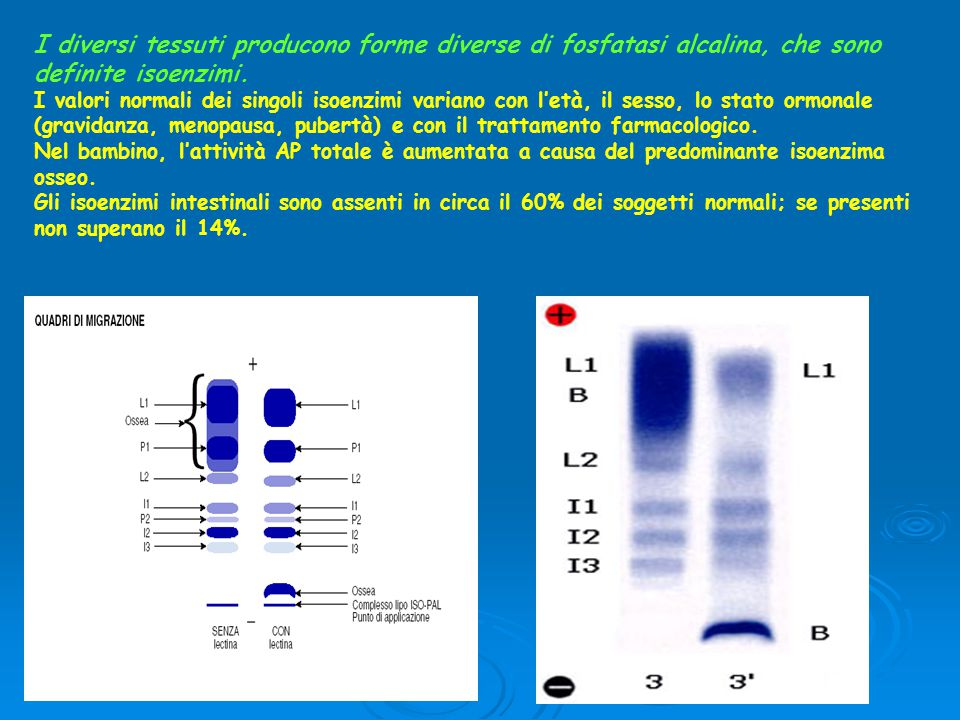 I diversi tessuti producono forme diverse di fosfatasi alcalina, che sono definite isoenzimi. I valori normali dei singoli isoenzimi variano con l'età