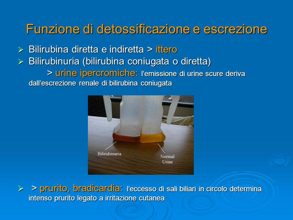 Funzione di detossificazione e escrezione  Bilirubina diretta e indiretta > ittero  Bilirubinuria (bilirubina coniugata o diretta) > urine ipercromi