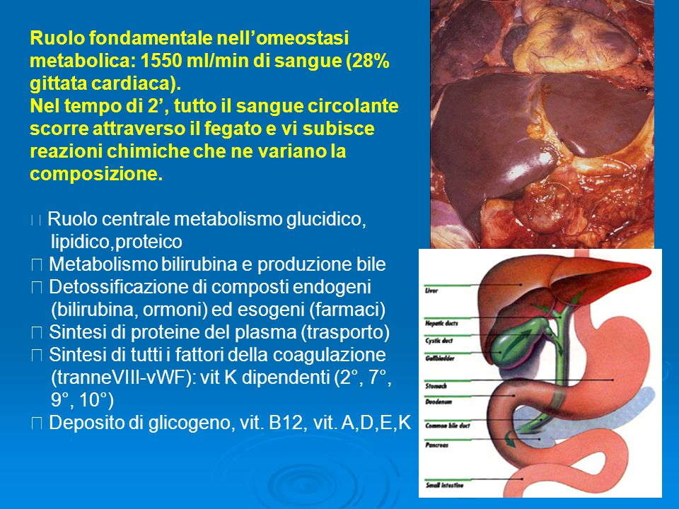 Colinesterasi Prodotta dal fegato, idrolizza esteri della colina Diminuisce per grave deterioramento della funzione epatica.Transferrina proteina di trasporto del Fe.