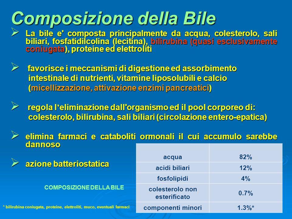 Composizione della Bile  La bile e' composta principalmente da acqua, colesterolo, sali biliari, fosfatidilcolina (lecitina), bilirubina (quasi esclu