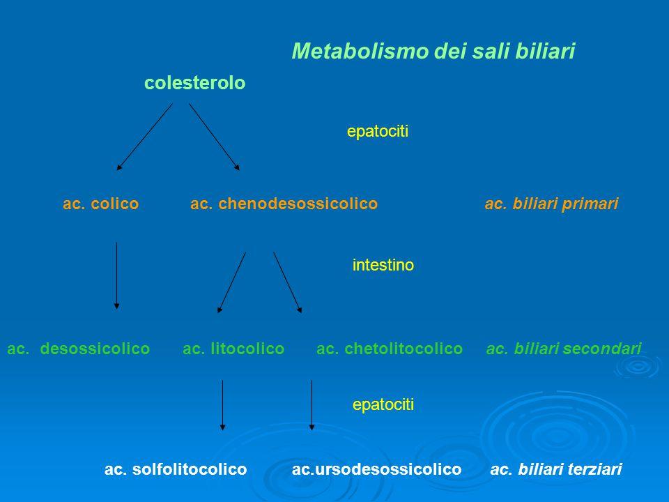colesterolo ac. colico ac. chenodesossicolico ac. biliari primari ac. desossicolico ac. litocolico ac. chetolitocolico ac. biliari secondari ac. solfo
