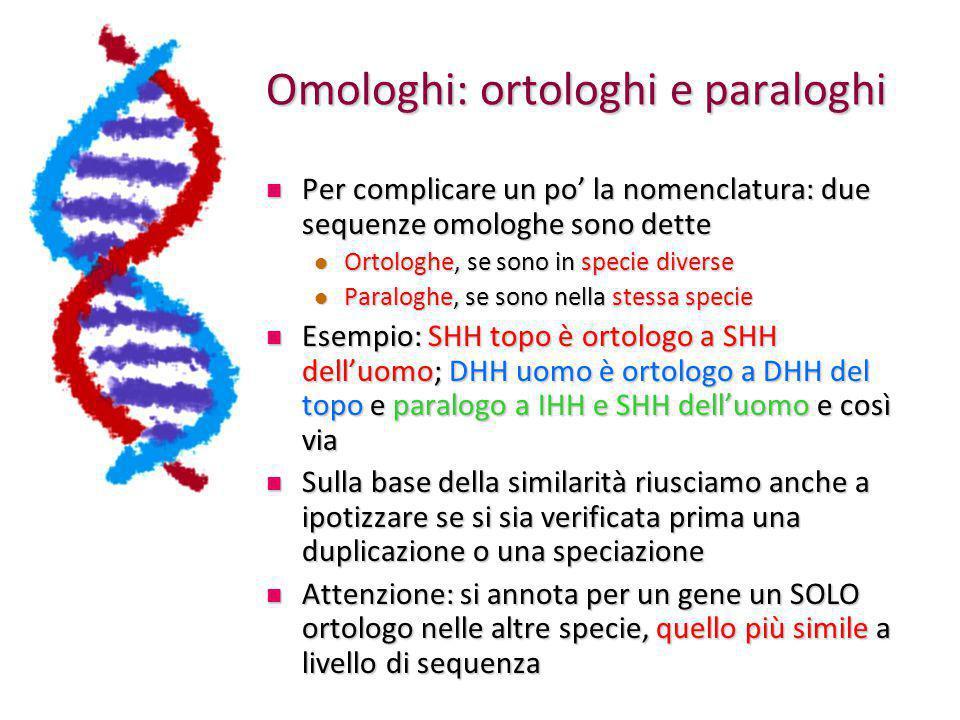 Omologhi: ortologhi e paraloghi Per complicare un po' la nomenclatura: due sequenze omologhe sono dette Per complicare un po' la nomenclatura: due sequenze omologhe sono dette Ortologhe, se sono in specie diverse Ortologhe, se sono in specie diverse Paraloghe, se sono nella stessa specie Paraloghe, se sono nella stessa specie Esempio: SHH topo è ortologo a SHH dell'uomo; DHH uomo è ortologo a DHH del topo e paralogo a IHH e SHH dell'uomo e così via Esempio: SHH topo è ortologo a SHH dell'uomo; DHH uomo è ortologo a DHH del topo e paralogo a IHH e SHH dell'uomo e così via Sulla base della similarità riusciamo anche a ipotizzare se si sia verificata prima una duplicazione o una speciazione Sulla base della similarità riusciamo anche a ipotizzare se si sia verificata prima una duplicazione o una speciazione Attenzione: si annota per un gene un SOLO ortologo nelle altre specie, quello più simile a livello di sequenza Attenzione: si annota per un gene un SOLO ortologo nelle altre specie, quello più simile a livello di sequenza