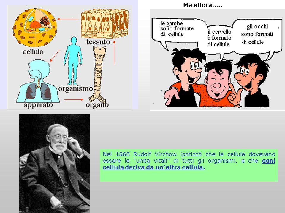 Approfondimenti con domande Negli organismi unicellulari, mitosi e riproduzione dell'individuo sono la medesima cosa.