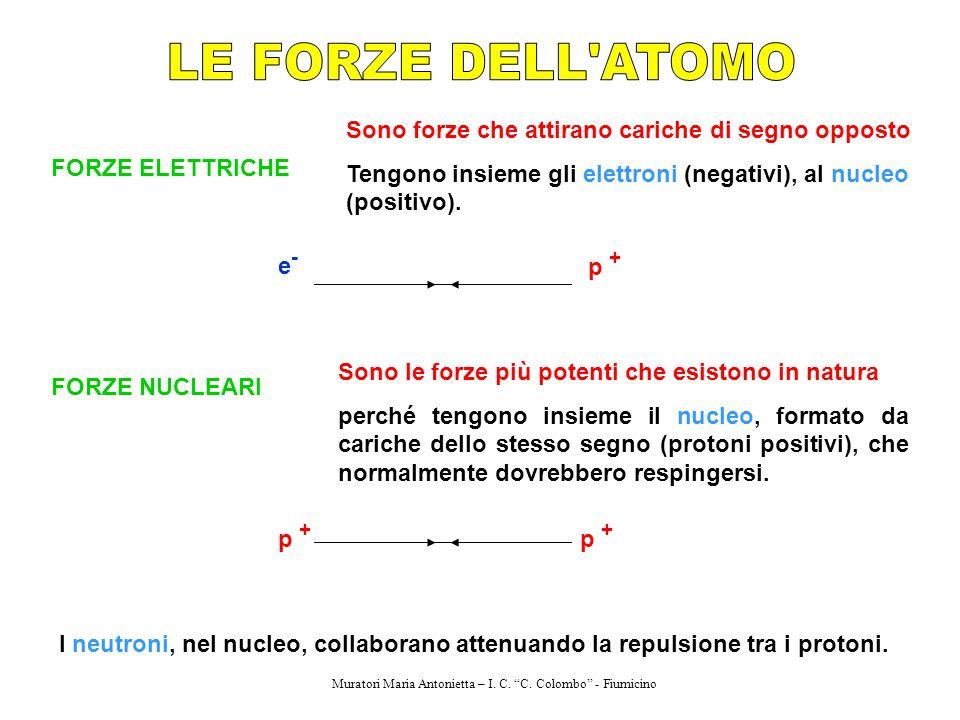 FORZE ELETTRICHE Sono forze che attirano cariche di segno opposto Tengono insieme gli elettroni (negativi), al nucleo (positivo). e-e- p + FORZE NUCLE