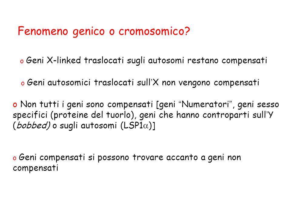 """Fenomeno genico o cromosomico? o Geni compensati si possono trovare accanto a geni non compensati o Non tutti i geni sono compensati [geni """" Numerator"""