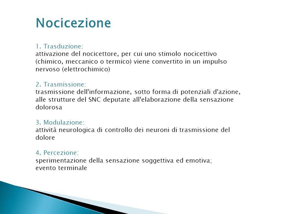 Nocicezione 1. Trasduzione: attivazione del nocicettore, per cui uno stimolo nocicettivo (chimico, meccanico o termico) viene convertito in un impulso