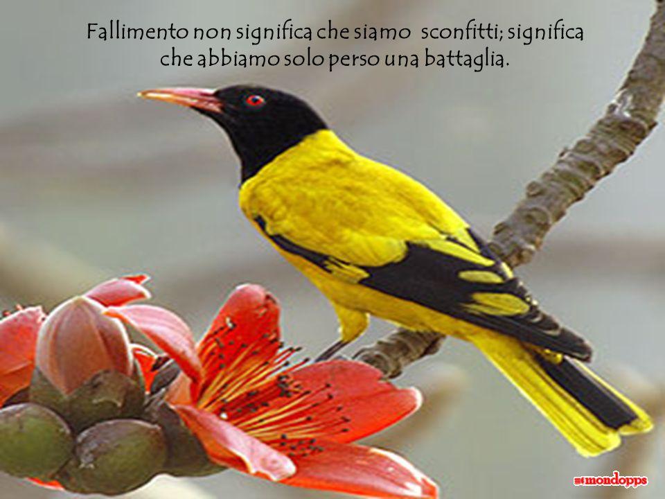 AdaliM Fallimento significa… Autore: C. M. Pérez Musica: Angeld Traduzione dallo spagnolo: Lulu