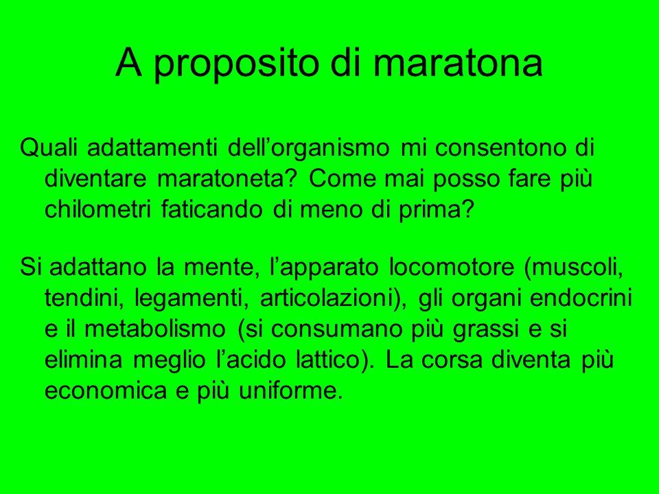 A proposito di maratona Quali adattamenti dell'organismo mi consentono di diventare maratoneta? Come mai posso fare più chilometri faticando di meno d