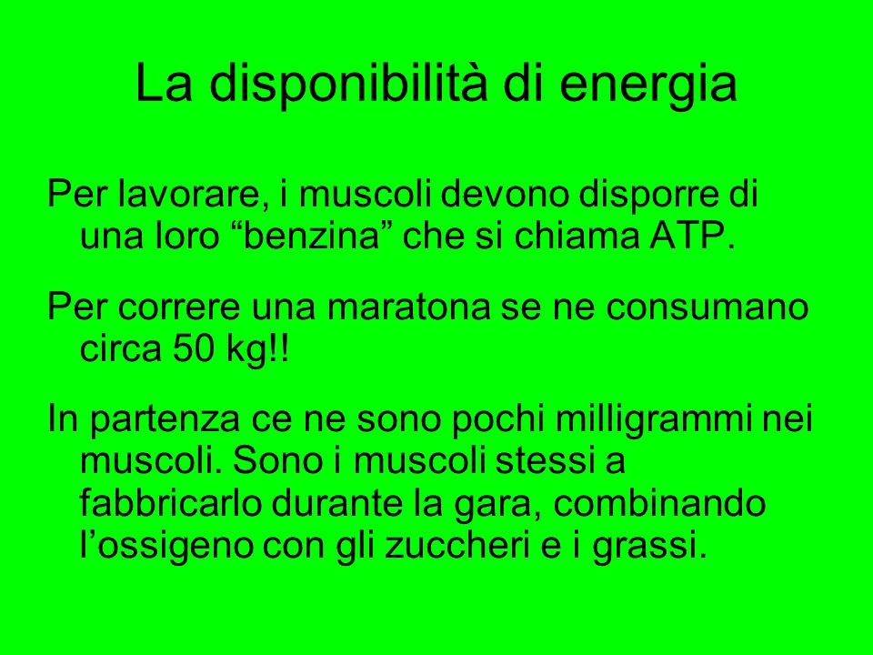 """La disponibilità di energia Per lavorare, i muscoli devono disporre di una loro """"benzina"""" che si chiama ATP. Per correre una maratona se ne consumano"""