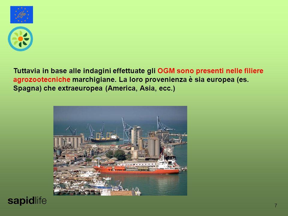 7 Tuttavia in base alle indagini effettuate gli OGM sono presenti nelle filiere agrozootecniche marchigiane.