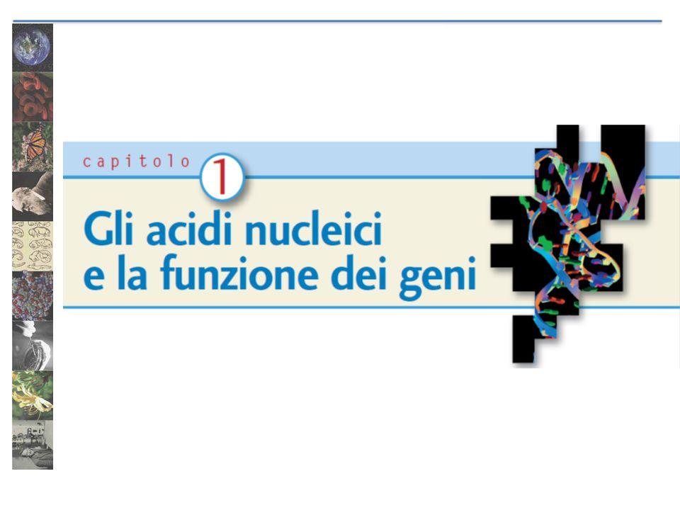 La doppia elica del DNA 25 aprile 1953: Francis Crick e James Watson pubblicano l'articolo che propone la struttura a doppia elica del DNA La proposta prende in considerazione i dati sperimentali raccolti da numerosi scienziati, tra i quali: Rosalind Franklin Maurice Wilkins Erwin Chargaff