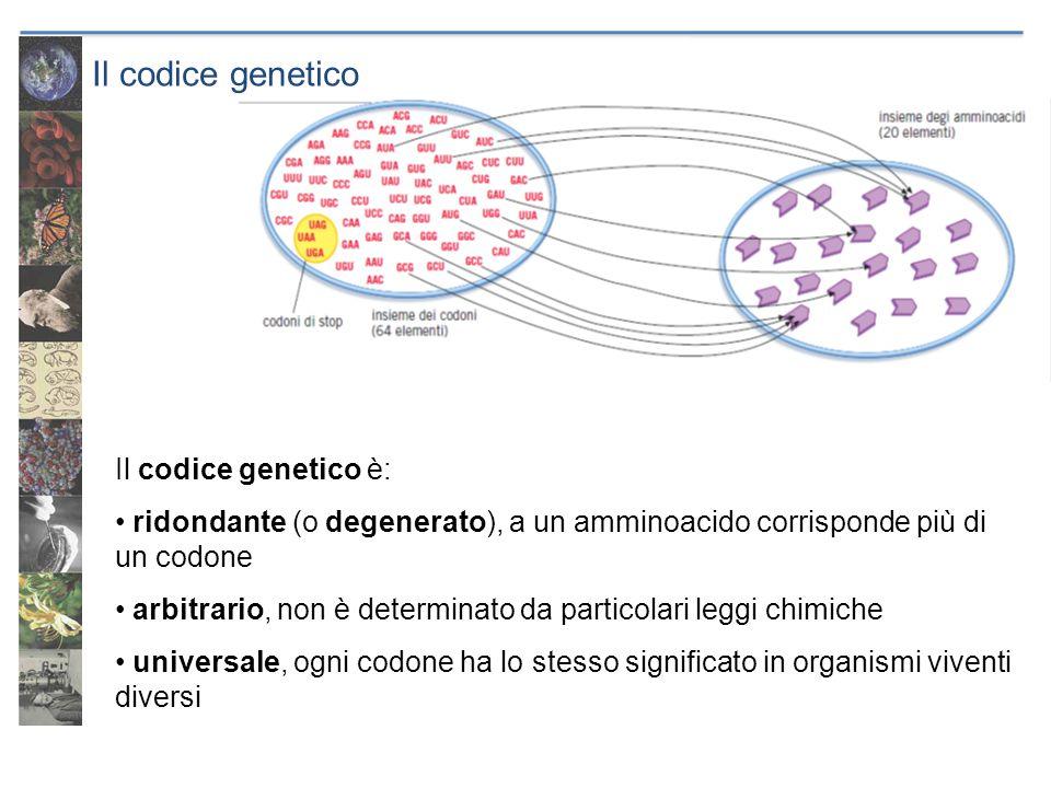 Il codice genetico Il codice genetico è: ridondante (o degenerato), a un amminoacido corrisponde più di un codone arbitrario, non è determinato da par