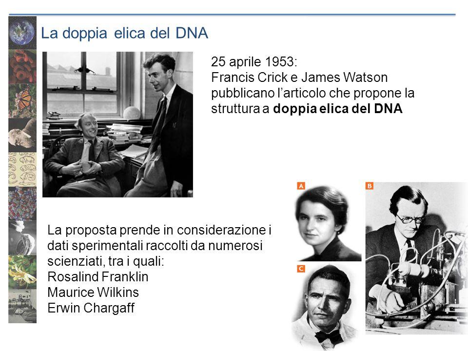 La doppia elica del DNA 25 aprile 1953: Francis Crick e James Watson pubblicano l'articolo che propone la struttura a doppia elica del DNA La proposta
