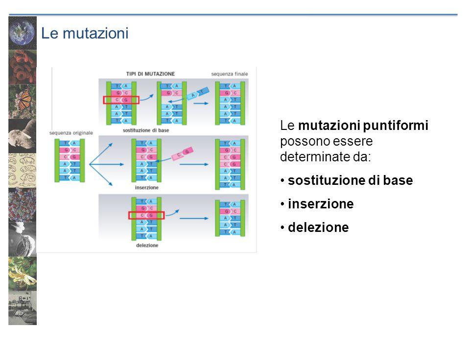 Le mutazioni Una sostituzione di base può produrre: un codone sinonimo una tripletta che codifica un amminoacido diverso un codone di stop Delezioni e inserzioni producono mutazioni frameshift