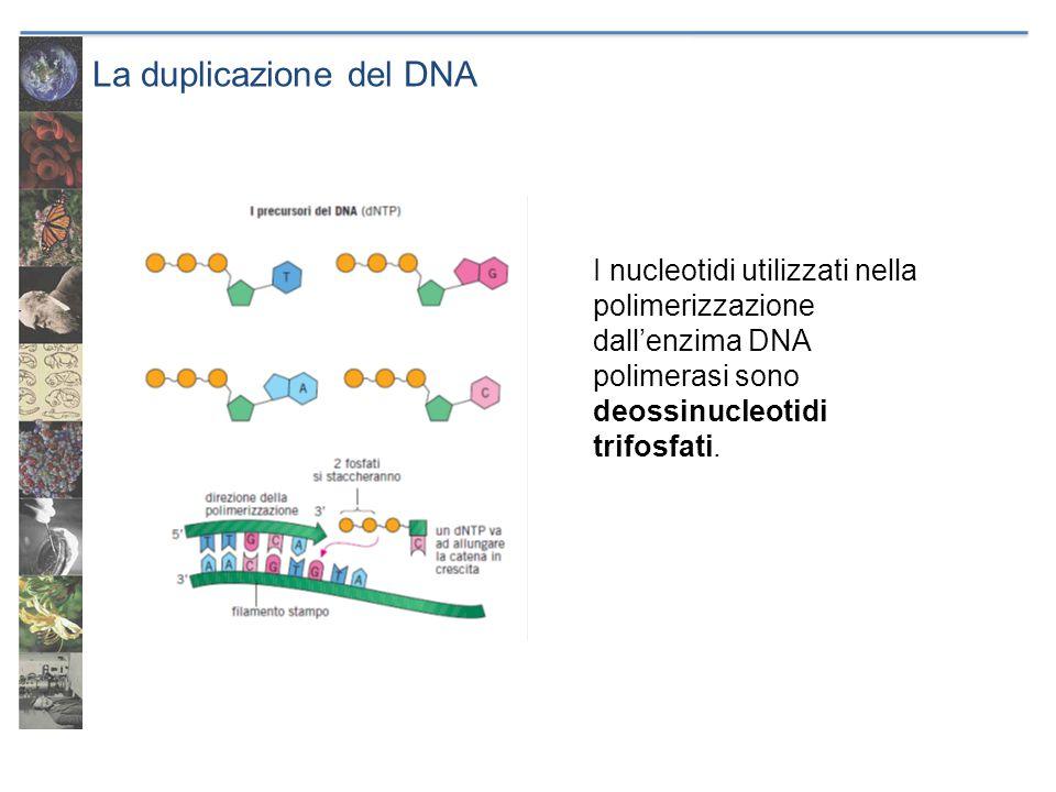 Il codice genetico Trascrizione Viene prodotta una molecola di RNA messaggero (mRNA) complementare a quella del gene.