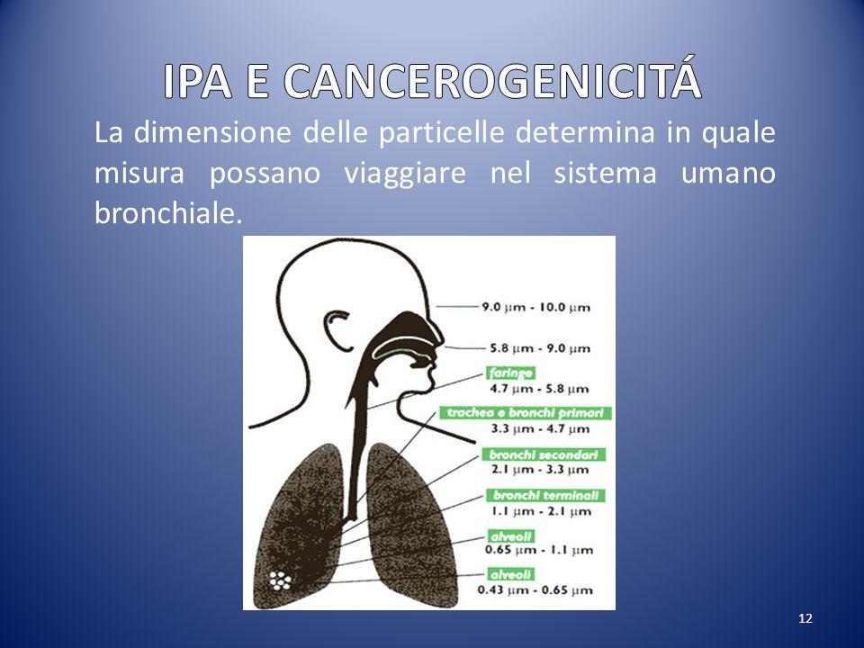 12 La dimensione delle particelle determina in quale misura possano viaggiare nel sistema umano bronchiale.