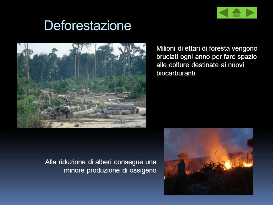 Deforestazione Alla riduzione di alberi consegue una minore produzione di ossigeno Milioni di ettari di foresta vengono bruciati ogni anno per fare sp