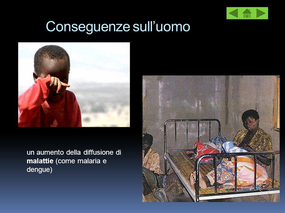 Conseguenze sull'uomo un aumento della diffusione di malattie (come malaria e dengue)