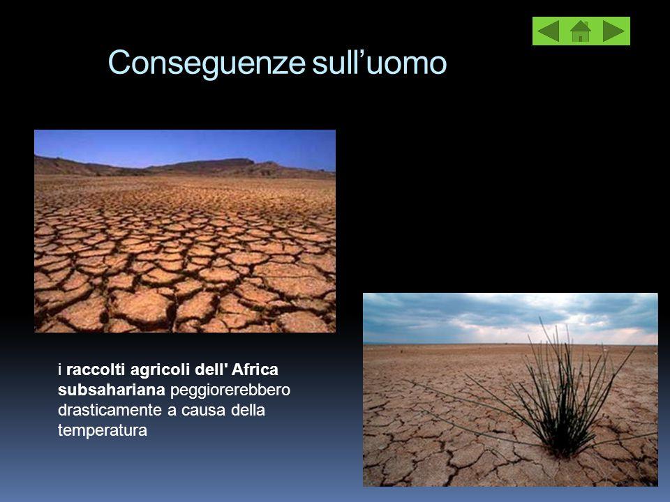 Conseguenze sull'uomo i raccolti agricoli dell' Africa subsahariana peggiorerebbero drasticamente a causa della temperatura