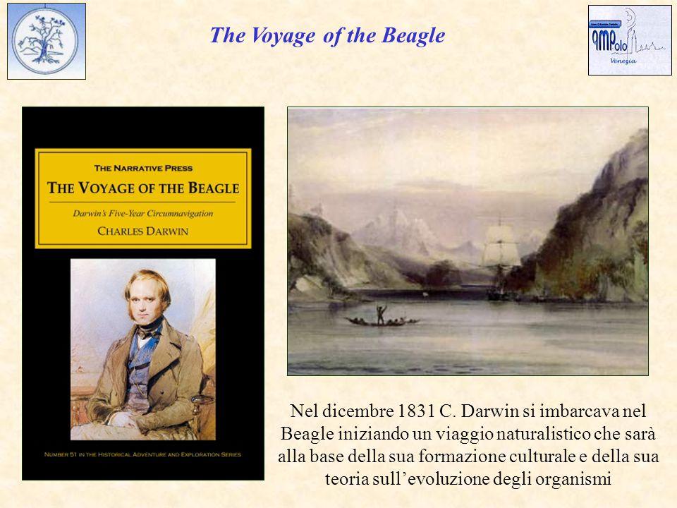 The Voyage of the Beagle Nel dicembre 1831 C.