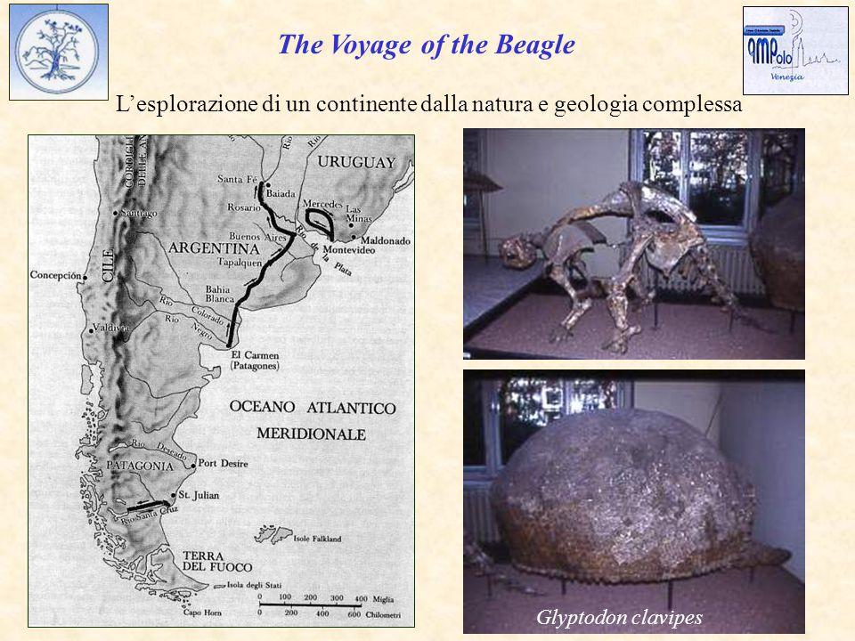 The Voyage of the Beagle L'esplorazione di un continente dalla natura e geologia complessa Glyptodon clavipes