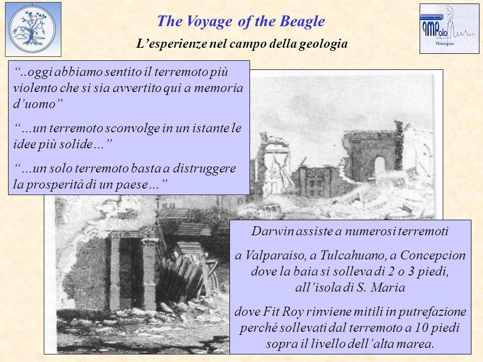 The Voyage of the Beagle L'esperienze nel campo della geologia ..oggi abbiamo sentito il terremoto più violento che si sia avvertito qui a memoria d'uomo …un terremoto sconvolge in un istante le idee più solide… …un solo terremoto basta a distruggere la prosperità di un paese… Darwin assiste a numerosi terremoti a Valparaiso, a Tulcahuano, a Concepcion dove la baia si solleva di 2 o 3 piedi, all'isola di S.