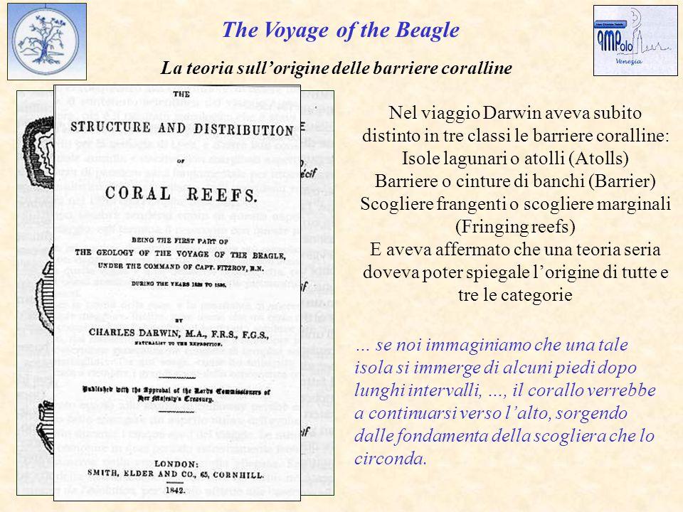 The Voyage of the Beagle Nel viaggio Darwin aveva subito distinto in tre classi le barriere coralline: Isole lagunari o atolli (Atolls) Barriere o cinture di banchi (Barrier) Scogliere frangenti o scogliere marginali (Fringing reefs) E aveva affermato che una teoria seria doveva poter spiegale l'origine di tutte e tre le categorie La teoria sull'origine delle barriere coralline … se noi immaginiamo che una tale isola si immerge di alcuni piedi dopo lunghi intervalli, …, il corallo verrebbe a continuarsi verso l'alto, sorgendo dalle fondamenta della scogliera che lo circonda.