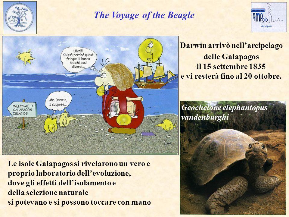 The Voyage of the Beagle Darwin arrivò nell'arcipelago delle Galapagos il 15 settembre 1835 e vi resterà fino al 20 ottobre.