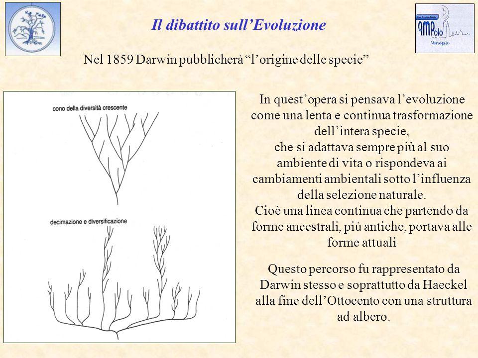 Nel 1859 Darwin pubblicherà l'origine delle specie In quest'opera si pensava l'evoluzione come una lenta e continua trasformazione dell'intera specie, che si adattava sempre più al suo ambiente di vita o rispondeva ai cambiamenti ambientali sotto l'influenza della selezione naturale.