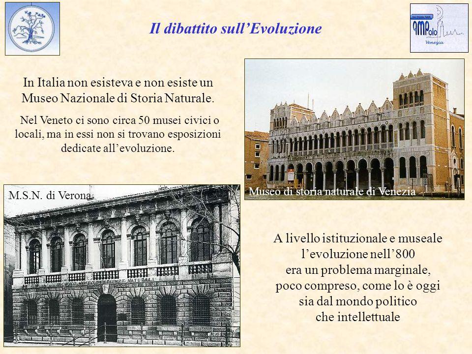 M.S.N.di Verona In Italia non esisteva e non esiste un Museo Nazionale di Storia Naturale.