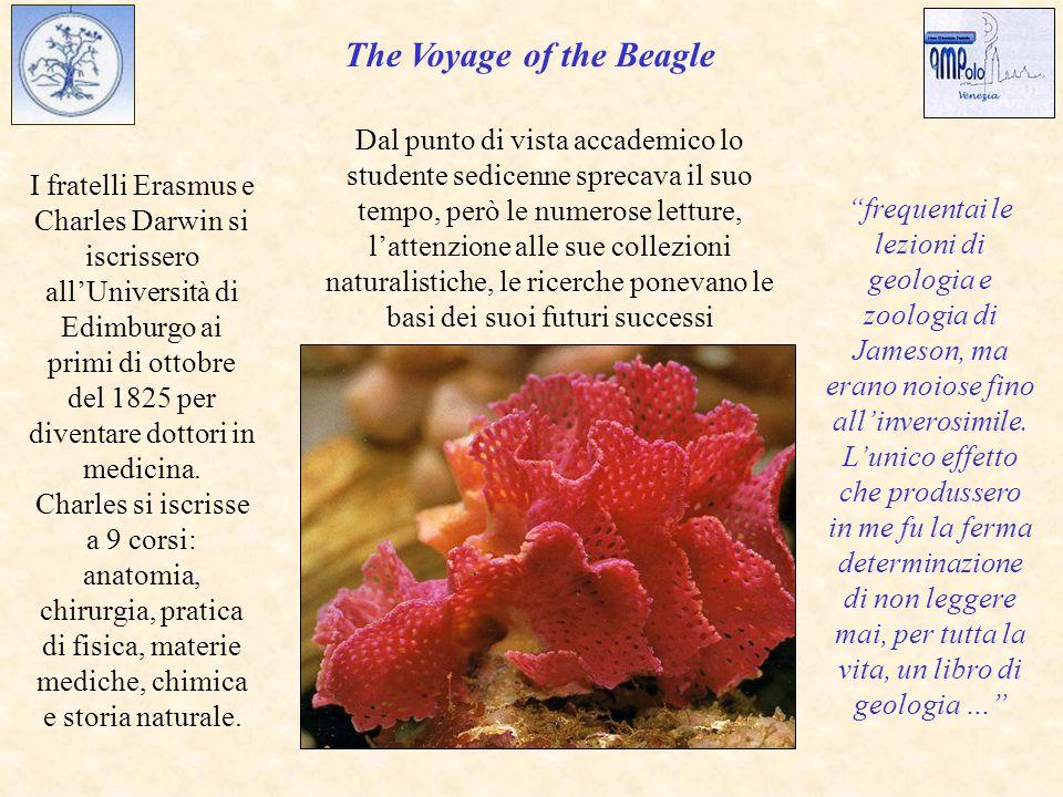 The Voyage of the Beagle I fratelli Erasmus e Charles Darwin si iscrissero all'Università di Edimburgo ai primi di ottobre del 1825 per diventare dottori in medicina.