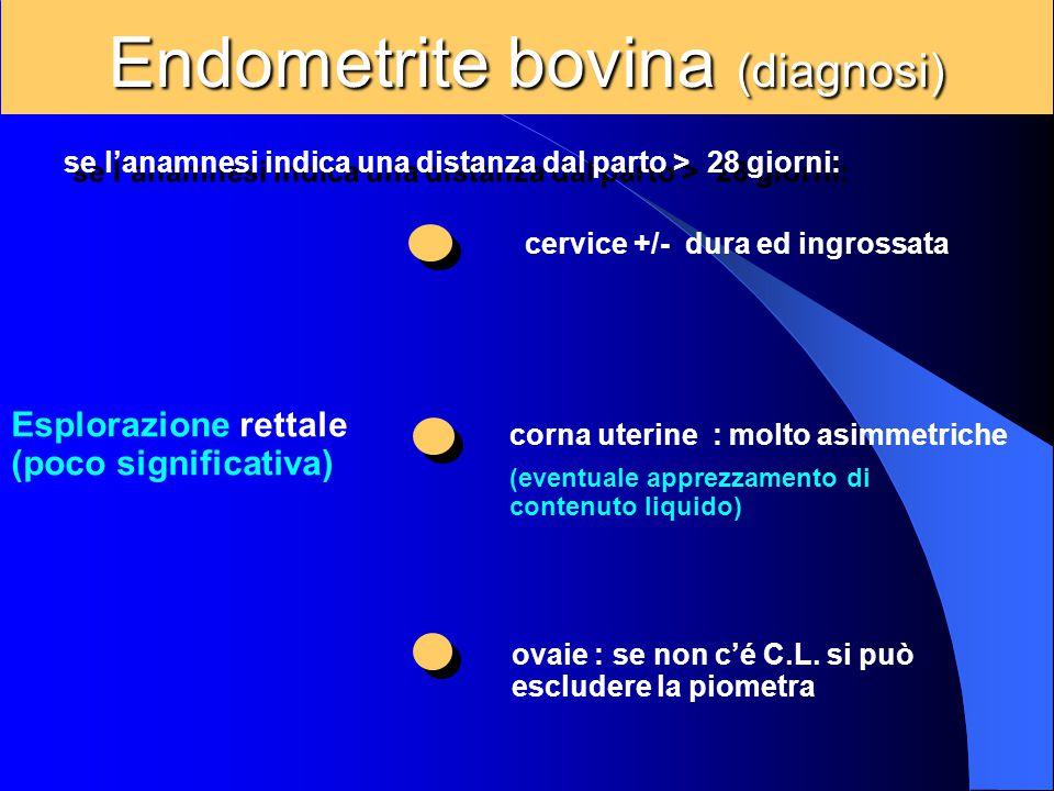 Endometrite bovina (diagnosi) se l'anamnesi indica una distanza dal parto > 28 giorni: Esplorazione rettale (poco significativa) cervice +/- dura ed i