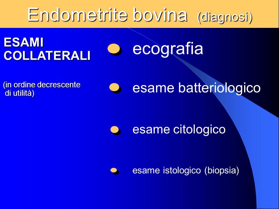 Endometrite bovina (diagnosi) ESAMI COLLATERALI (in ordine decrescente di utilità) di utilità) ecografia esame batteriologico esame citologico esame i
