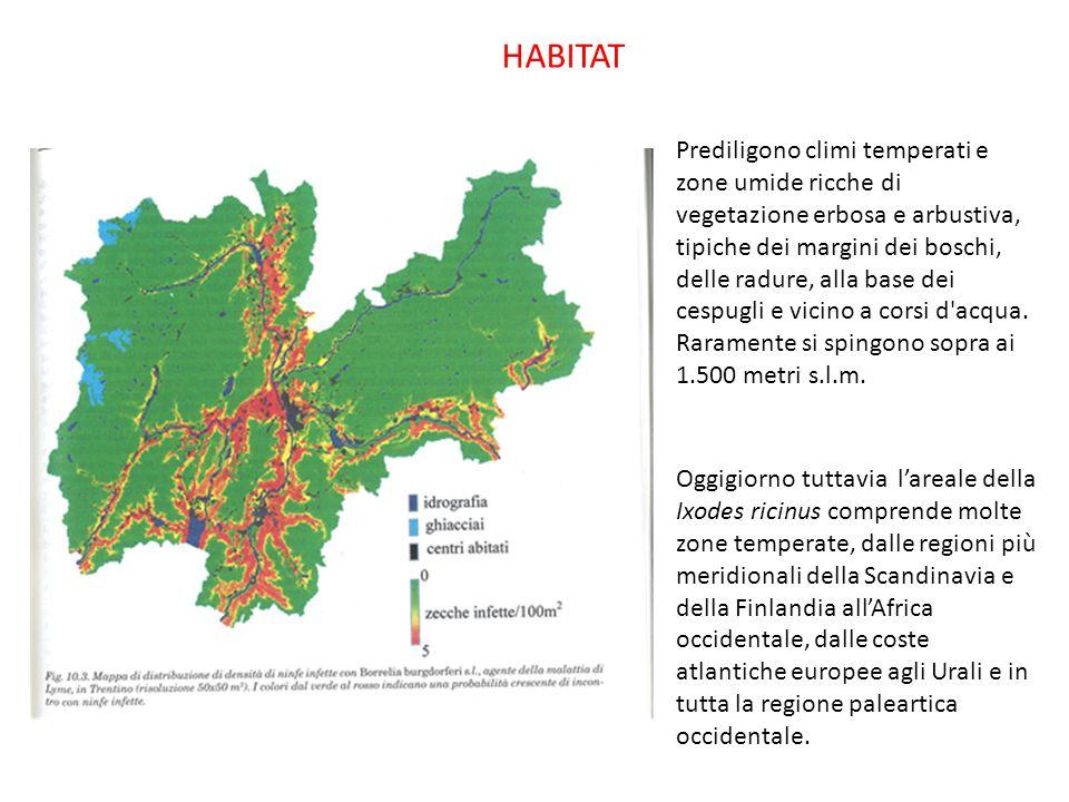 HABITAT Prediligono climi temperati e zone umide ricche di vegetazione erbosa e arbustiva, tipiche dei margini dei boschi, delle radure, alla base dei