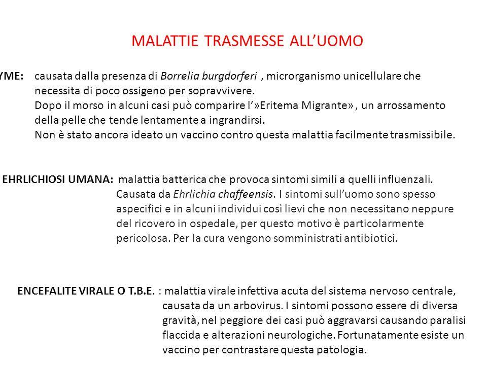 COME RIMUOVERE LA ZECCA 1.disinfettare la zona interessata; 2.