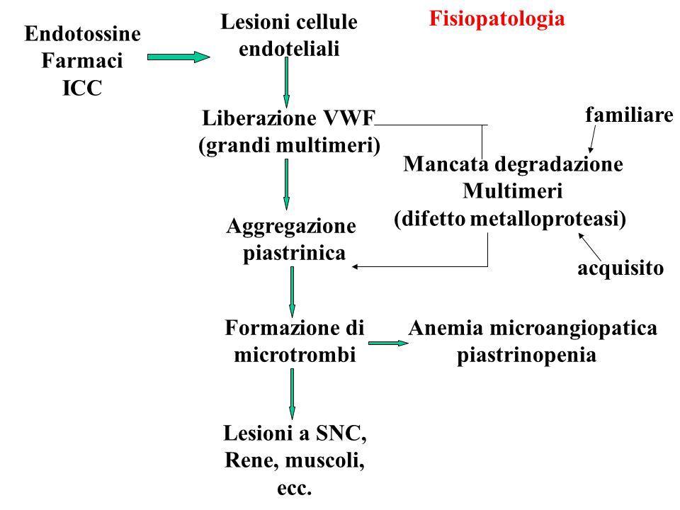 Endotossine Farmaci ICC Lesioni cellule endoteliali Liberazione VWF (grandi multimeri) Aggregazione piastrinica Formazione di microtrombi Lesioni a SN