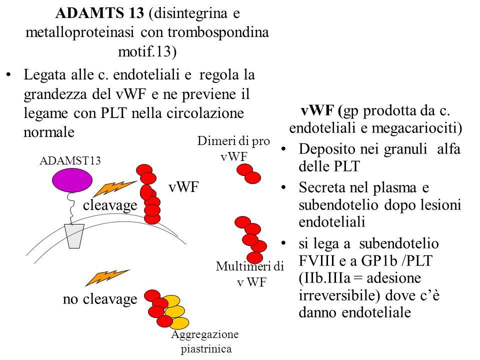 ADAMTS 13 (disintegrina e metalloproteinasi con trombospondina motif.13) Legata alle c. endoteliali e regola la grandezza del vWF e ne previene il leg
