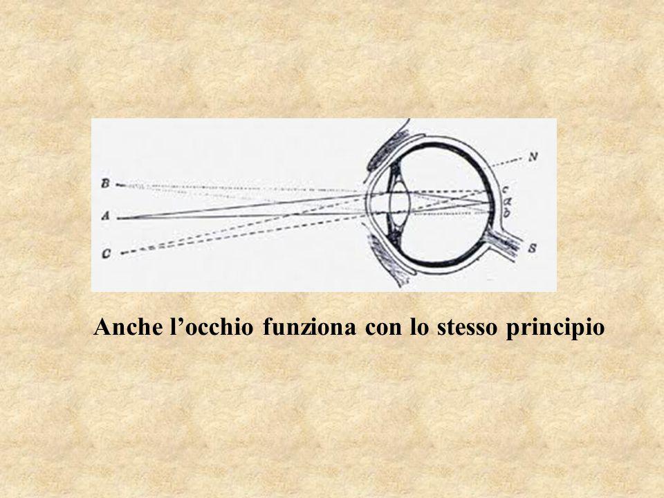 Anche l'occhio funziona con lo stesso principio
