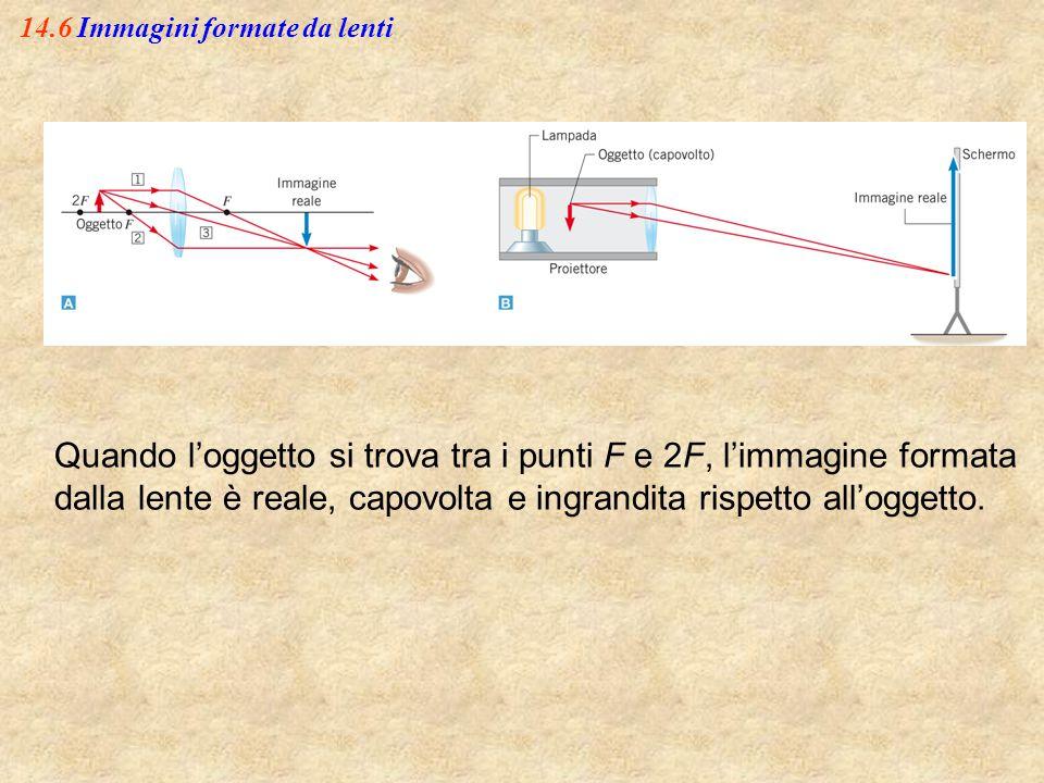 14.6 Immagini formate da lenti Quando l'oggetto si trova tra i punti F e 2F, l'immagine formata dalla lente è reale, capovolta e ingrandita rispetto a