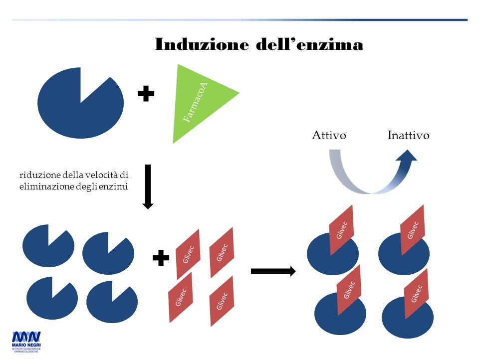 Induzione dell'enzima Glivec FarmacoA riduzione della velocità di eliminazione degli enzimi AttivoInattivo