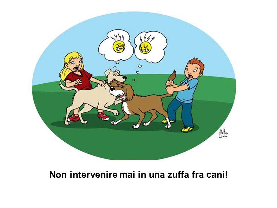 Non intervenire mai in una zuffa fra cani!