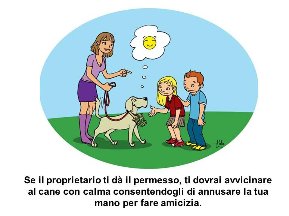 Se il proprietario ti dà il permesso, ti dovrai avvicinare al cane con calma consentendogli di annusare la tua mano per fare amicizia.