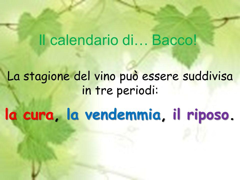 La stagione del vino può essere suddivisa in tre periodi: la cura, la vendemmia, il riposo.